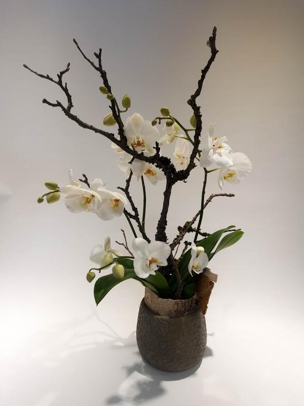 Orchidee im Topf weiss